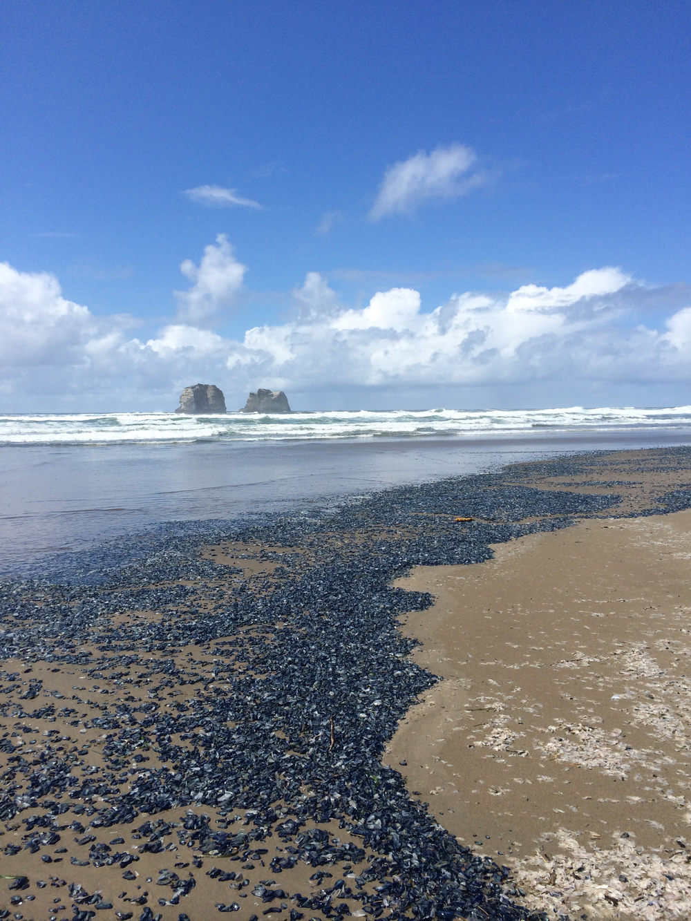 Field sampling in Neskowin, Oregon.