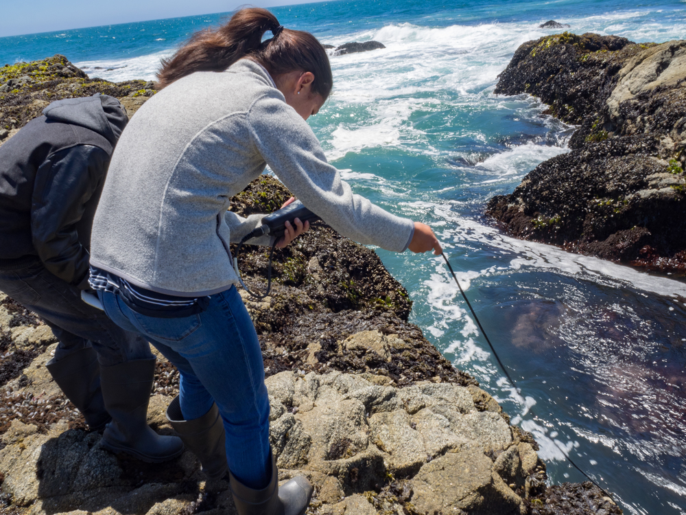 Sampling tidepool chemistry at Bodega Marine Reserve. Photo credit: A. Ninokawa