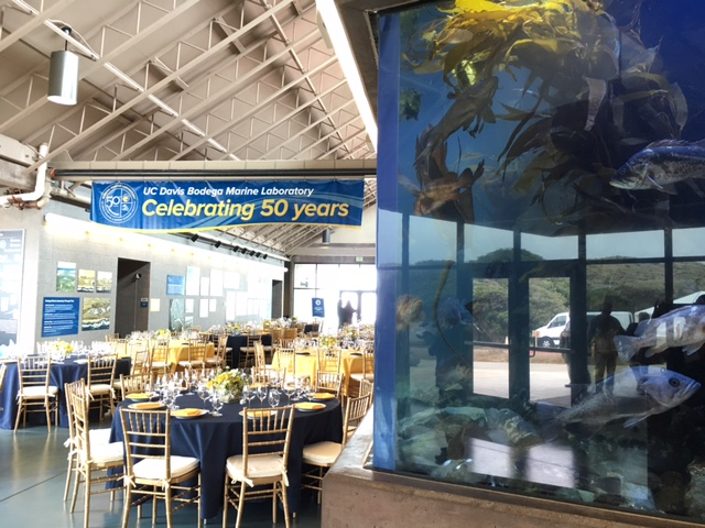 The 'Great Hall' and fish tanks, ready for the BML 50th celebration.  Photo credit: T. Hill