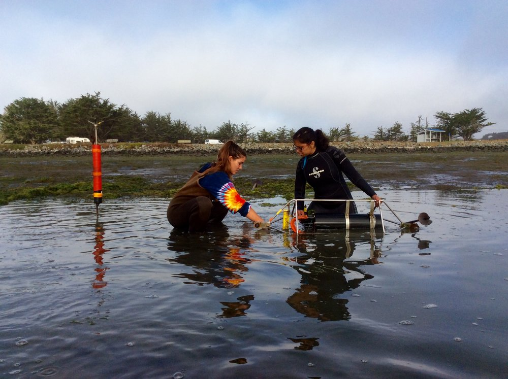 Jacky and Priya deploying pH sensors in Bodega Harbor, CA. Photo: Melissa Ward.