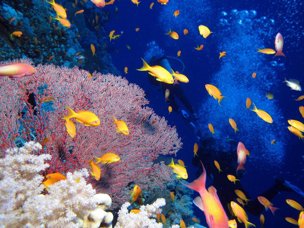 Coral reef image: Flikr