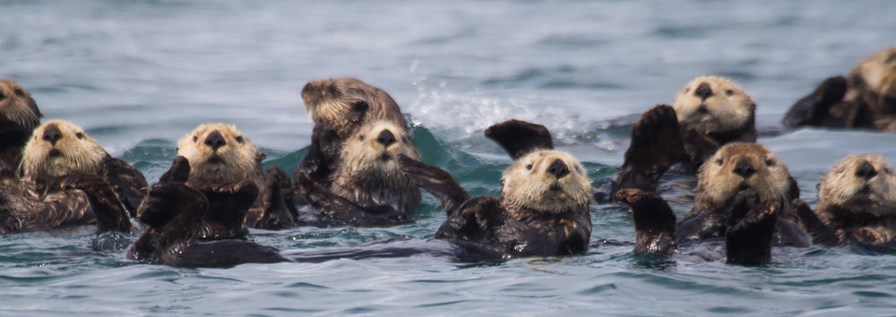 Image: https://www.nps.gov/glba/blogs/otters-on-ice.htm