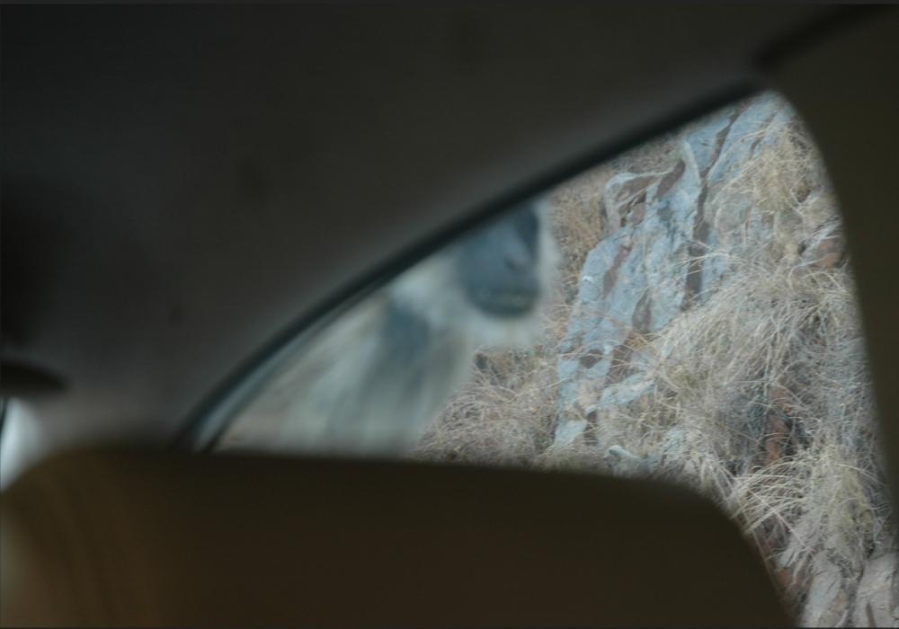 Cue  Monkey thru car window.jpg
