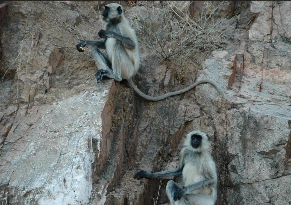 Cue  two monkeys on weall.jpg
