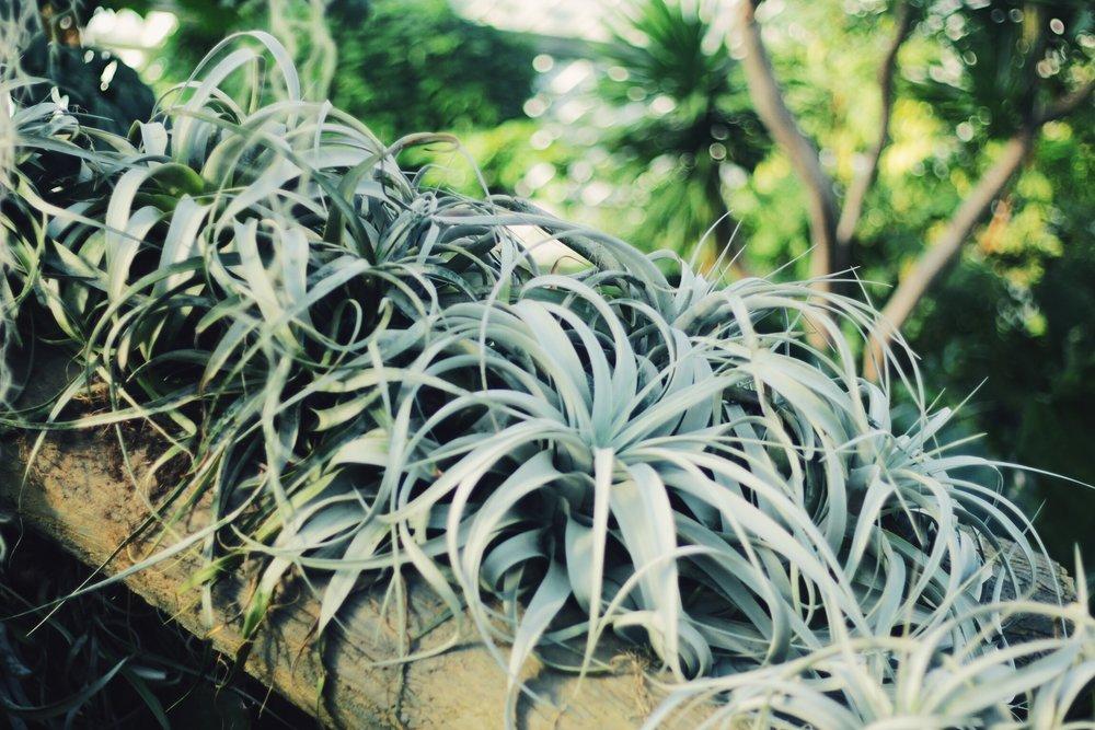Parasites in Zone 2 (Dry Tropics)