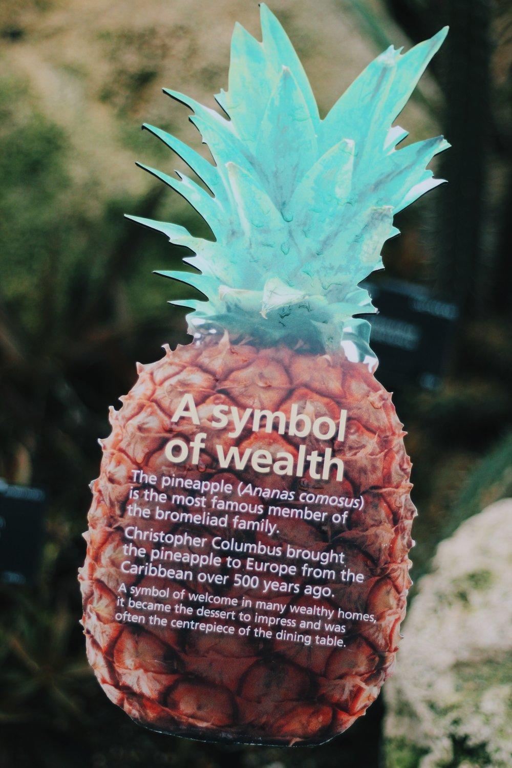 I found this so cool because the national fruit of Antigua and Barbuda is the [Black] Pineapple. Our National Symbol is a symbol of wealth