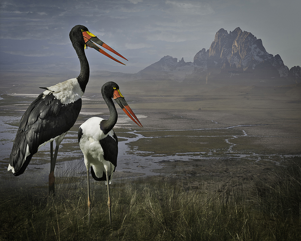 August 14, 2015 - Link to Photoshop for the Birds by Alyssa Coppelman published in Inspire Adobe  At first glance, Cheryl Medow's highly detailed images look like real landscapes, but it soon becomes apparent that something more unusual is going on. To create her ongoing series Envisioning Habitat, Medow first photographs birds and landscapes in the United States, Africa, Europe, and South and Central America. Then she constructs an entirely new reality out of those original photographs, resulting in the art you see here.
