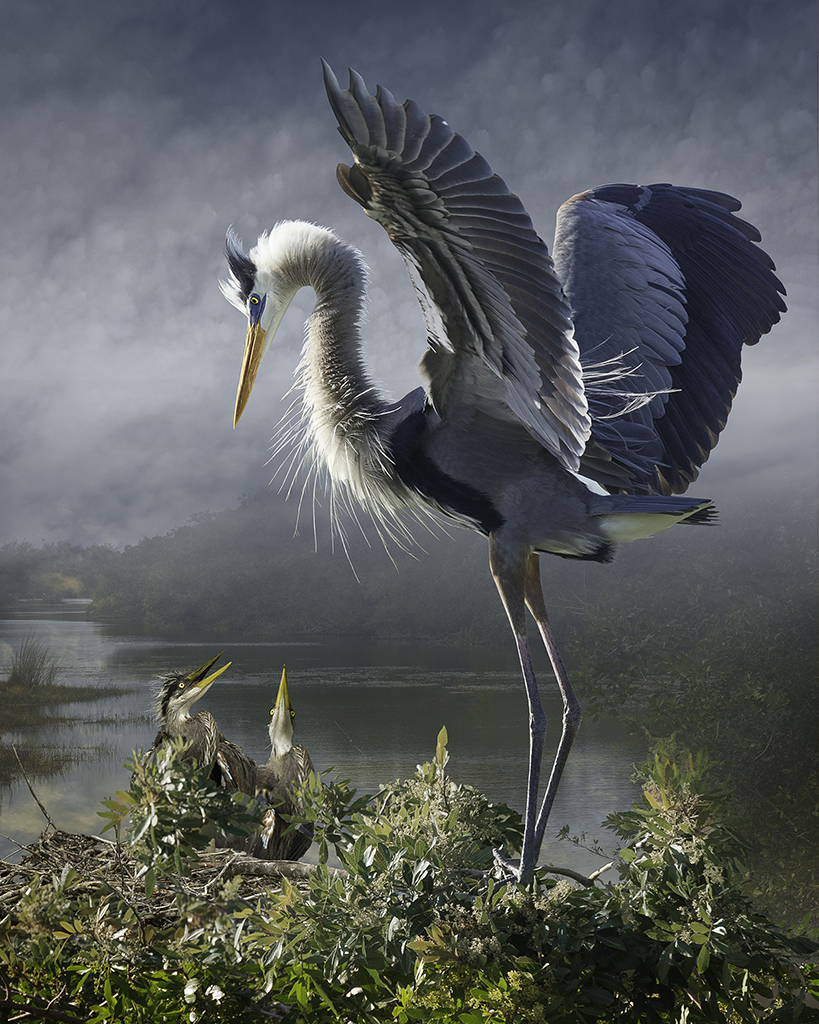 Link to Photo Realism:  Seeing Birds In A New Wild    July 12, 2015 -  Sunday Still Issue 43 was on Proof National Geographic .   Medow's work evokes the paintings of  Martin J. Heade .