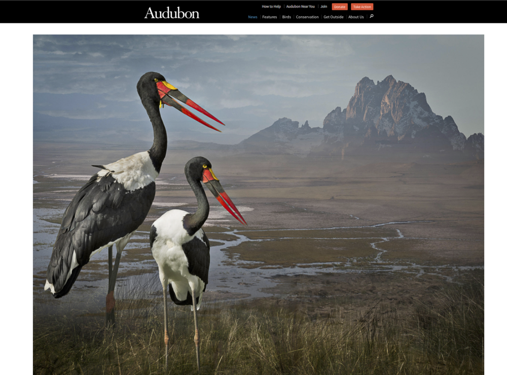 June 5, 2015 an article in Audubon was written by Becca Cudmore on my collection, Avian Alchemy.  Five image were selected from my Envisioning Habitat series for the article.  Four images were selected earlier as finalists for the Audubon 2015 Photo Awards