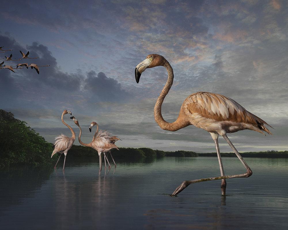 2. Flamingos at Rio Lagartos