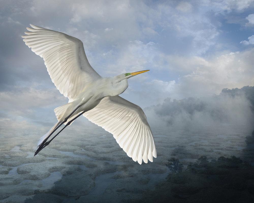 great egret over kiwayu  ©2014