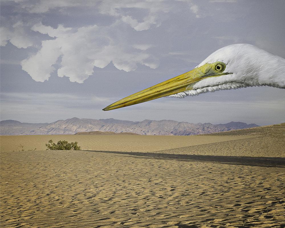 great egret in the desert  ©2012