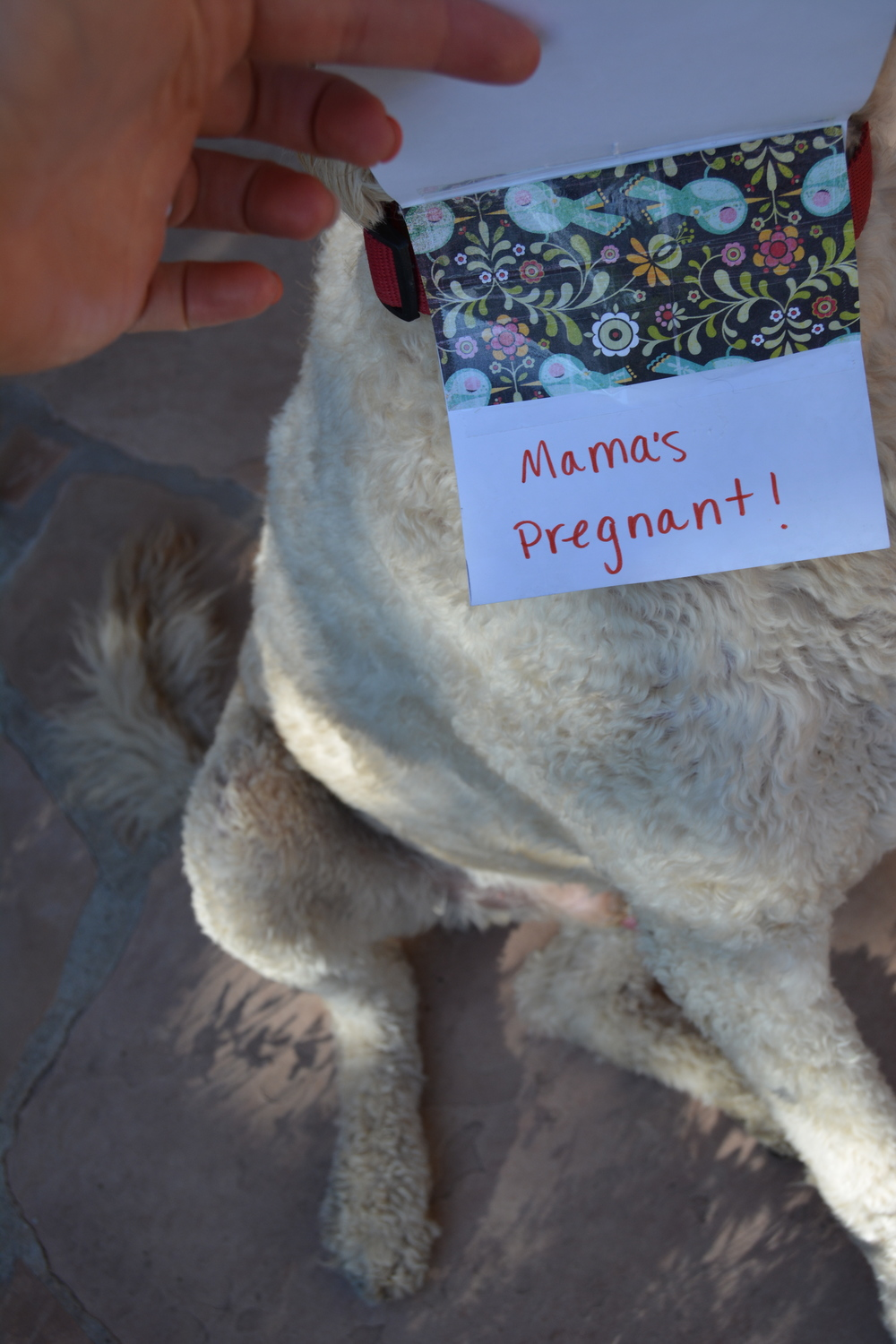 Cute way to tell hubby you're pregnant!