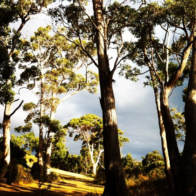 Love our trees... #discovertasmania #see #trees #nature #seeaustralia #hobartandbeyond #brunyisland #tasmaniagram #discover #landscape
