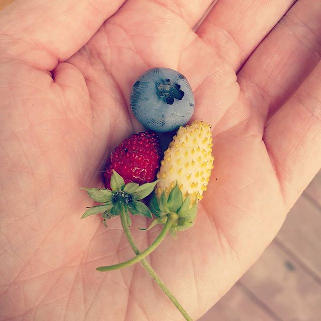 Happy 4th of July!  #minnesotagrown #minnesota #4thofjuly #homegrown
