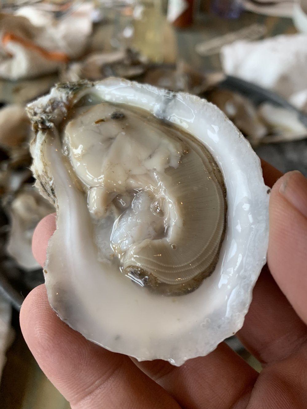 Have you ever gotten this close to your oyster? You're welcome.