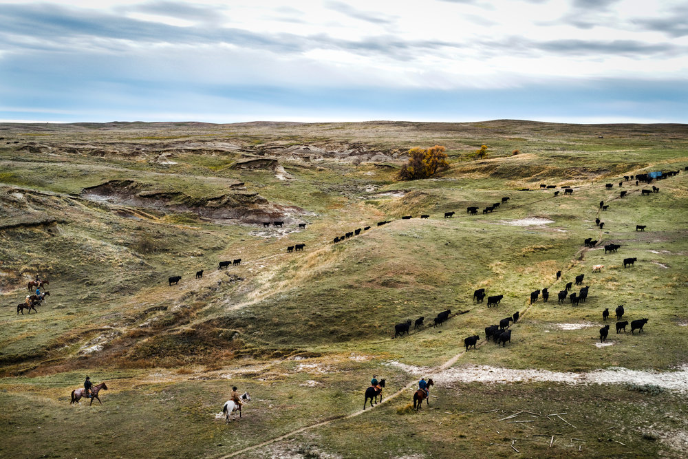 "45º38'23.3""N, 102º02'21.7""W. 121 miles from the nearest McDonald's.  A group of friends round up cattle on land owned by a grazing association south of Lemmon, SD. Grazing associations are cooperative areas with group ownership that allow for the better use of range forage while conserving limited natural resources. The association land was ravaged by one of the region's largest wildfires in 2005, burning down much of the grassland and the old homestead but Cam Miles, son of one of the owners, spent days camped by the corrals and barn in an effort to save them."
