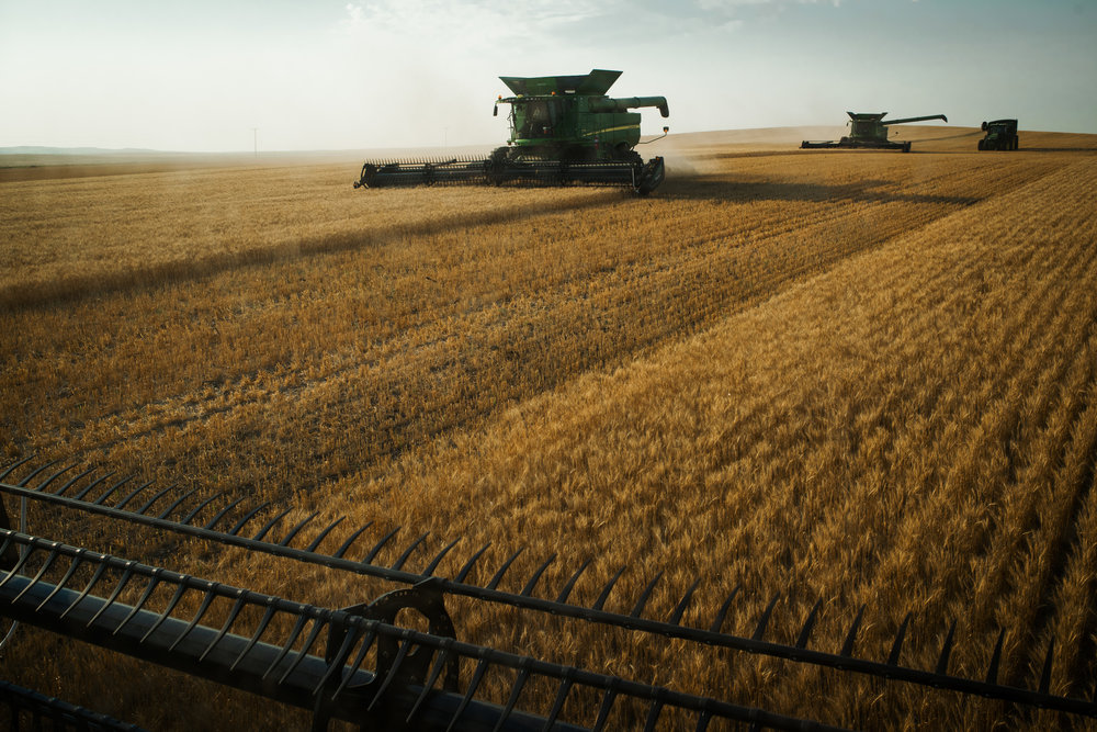"""45º29'05.8""""N, 102º40'44.5""""W. 108 miles from the nearest McDonald's.  Harvesters from a major area farm work a wheat field outside of Bison, SD on August 1, 2017. Due to the drought, many area farmers have taken a complete loss on their crops and winter feed for cattle is at an extreme shortage."""