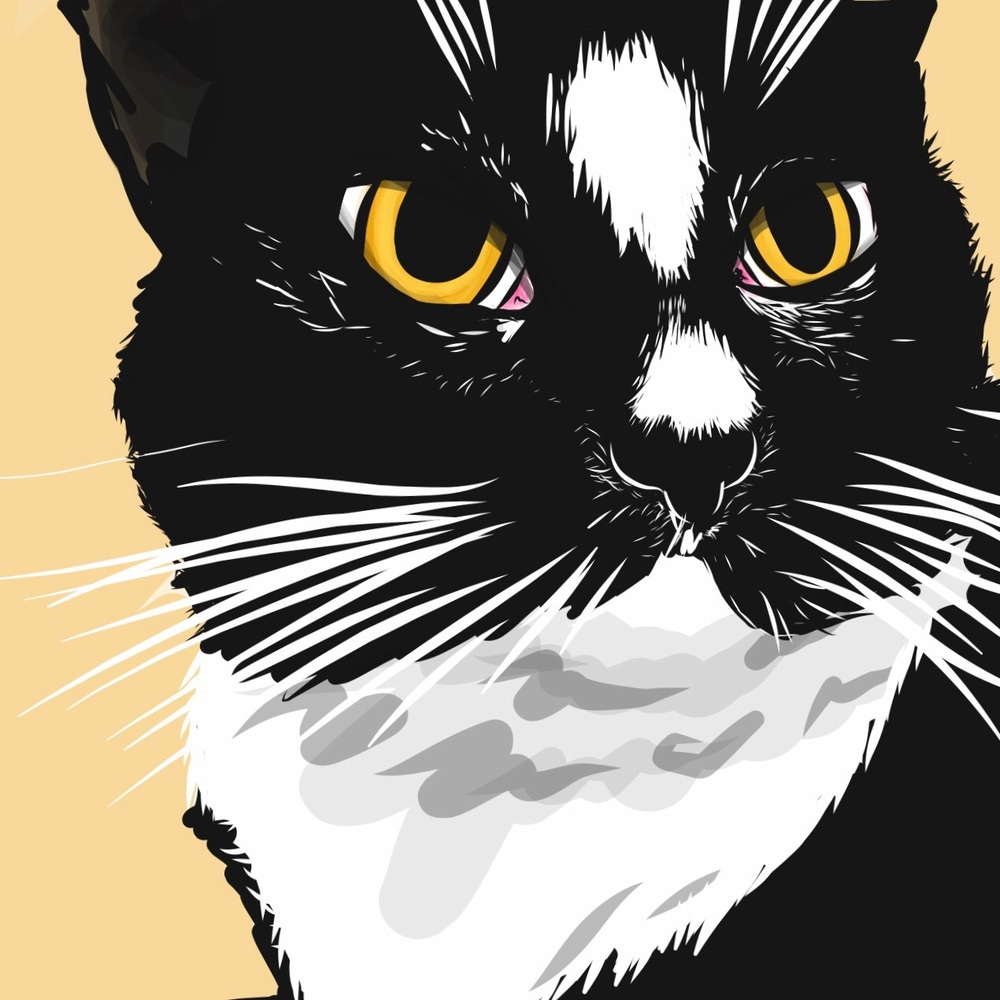 My good friend's cat, Alcyone, makes a perfect model for black and white vector work.