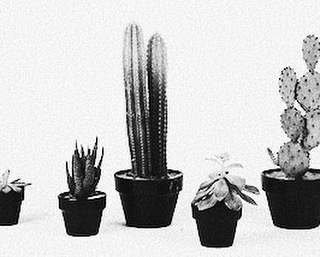 Plant companions ☞ ideal for good times, ideal for good fun 🌵