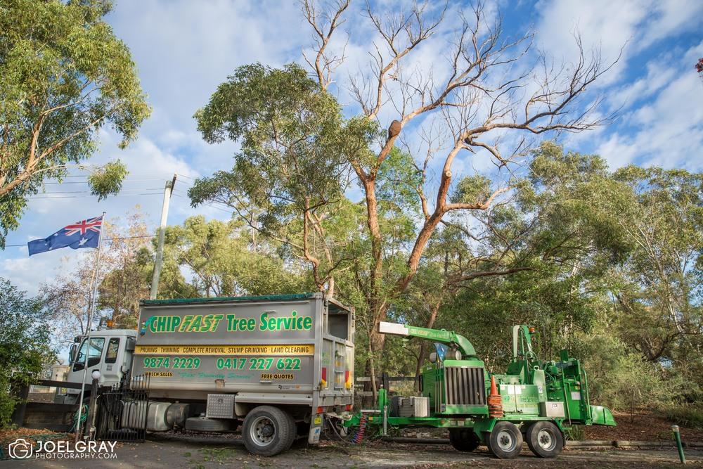chipfast tree service dural