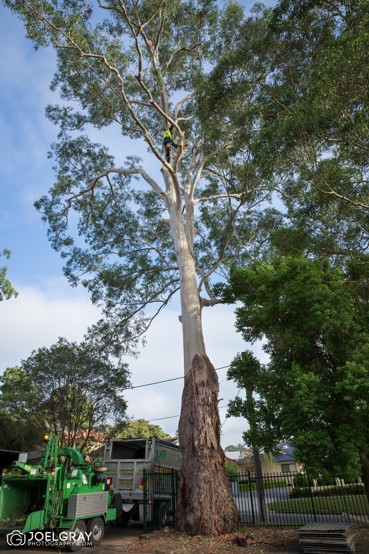 sydney tree service