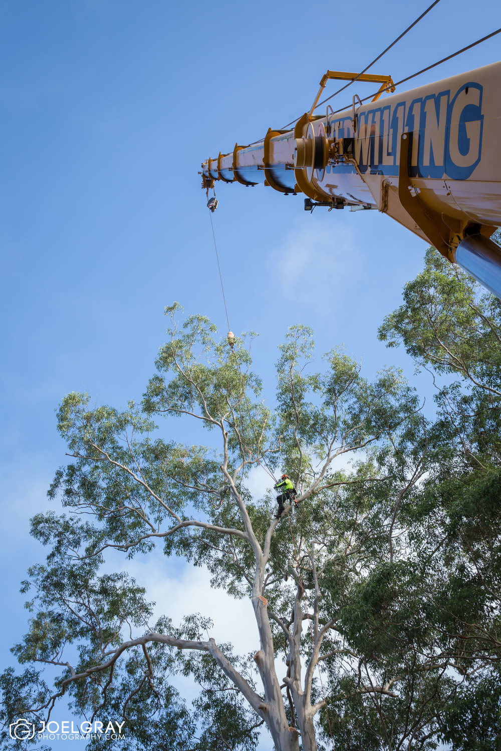 large tree removal crane removal