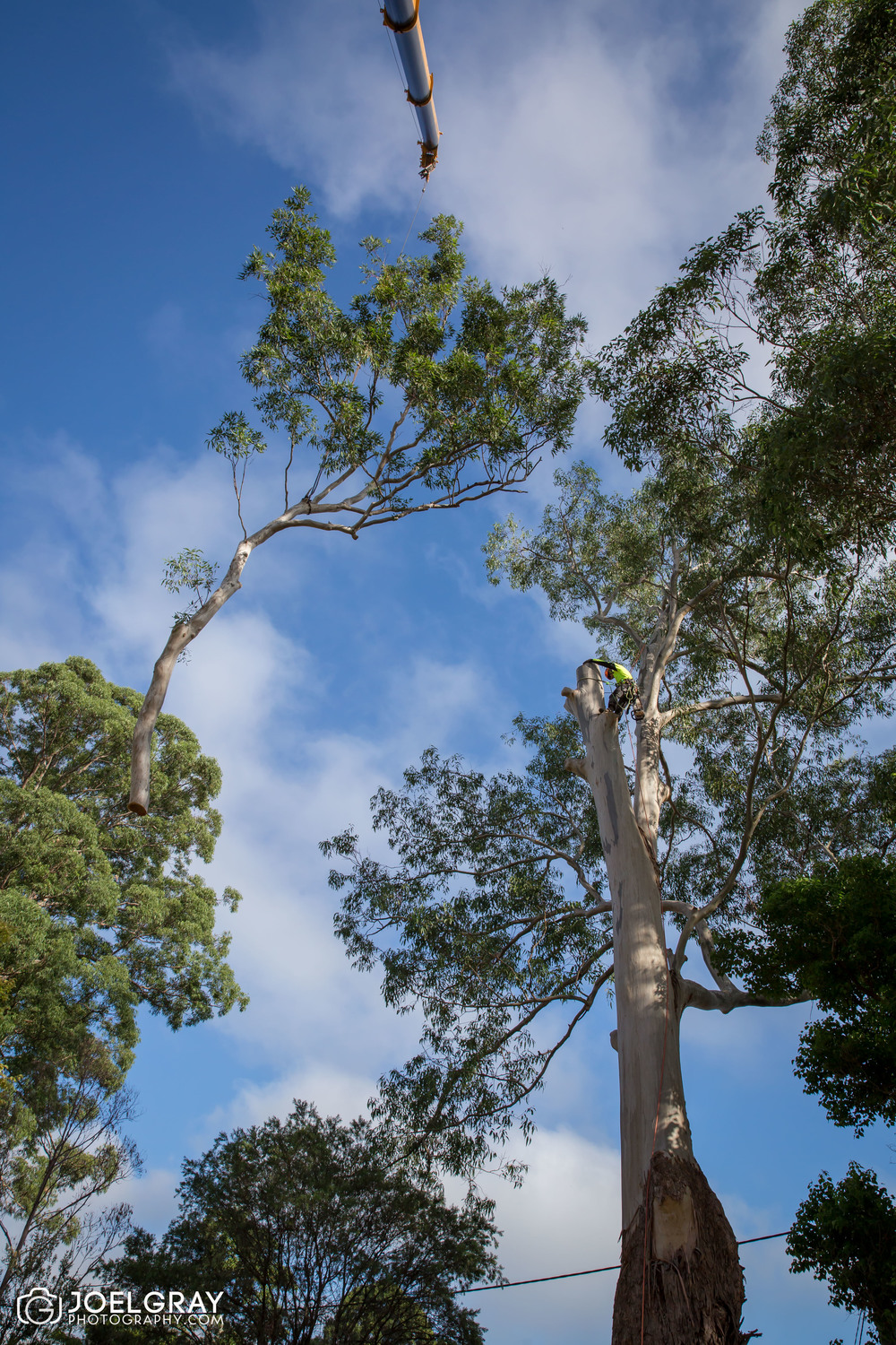 large tree removal with crane sydney
