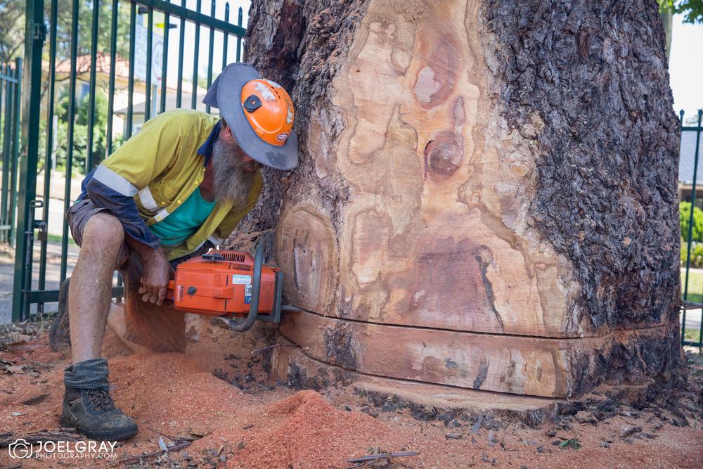 tree removal service sydney