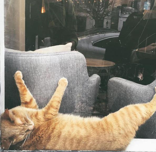 CW IG cat nap 3.png