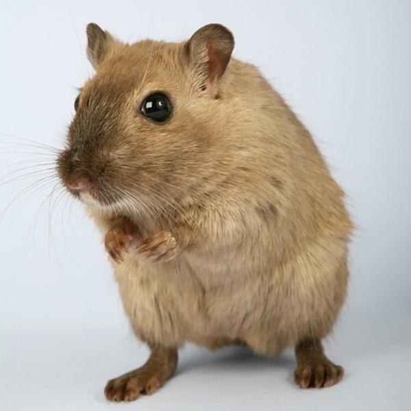 hamster.jpg