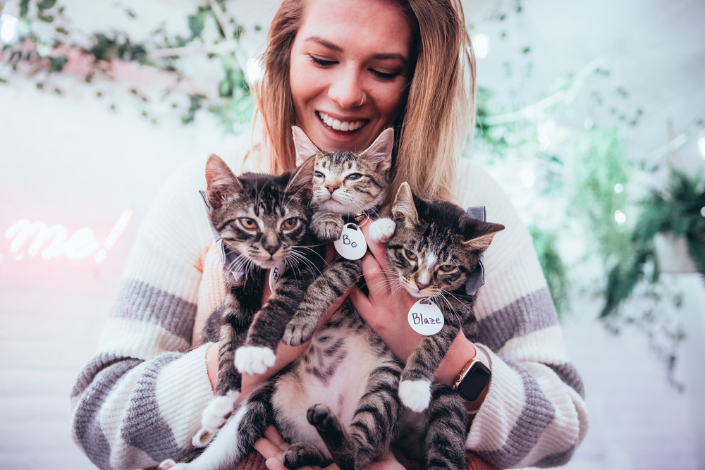 So, what is The Kitten Lounge? - The pop-up Kitten Lounge is a place filled with adorable rescue kittens who are looking for their forever homes. You can play with them, cuddle with them, nap with them, do a photoshoot with them, and if you fall in love...adopt them!