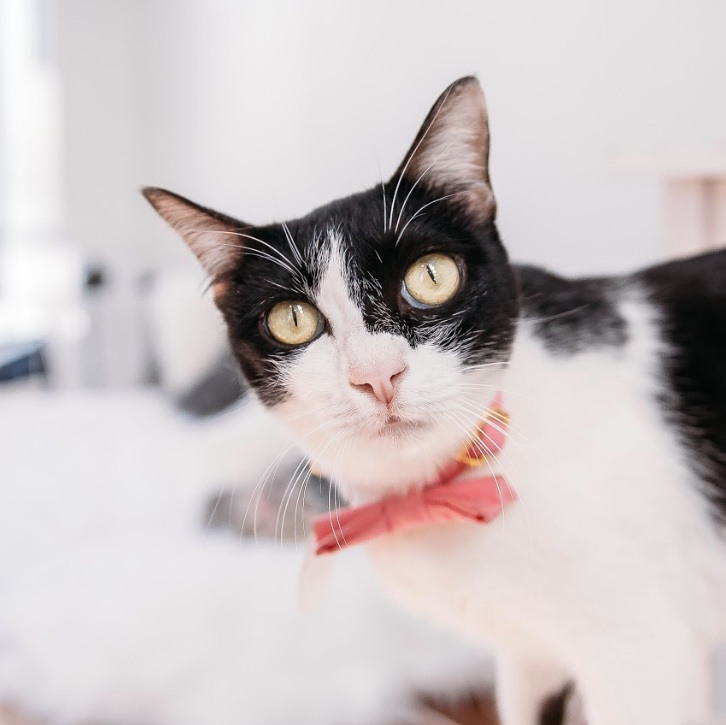 ROBBIE   Female ∙ 1.5 years    Purrsonality:  We can't wait to find out!