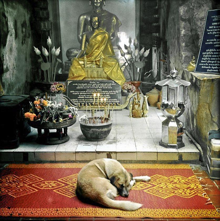 Wat Umong, Chiang Mai, 2012