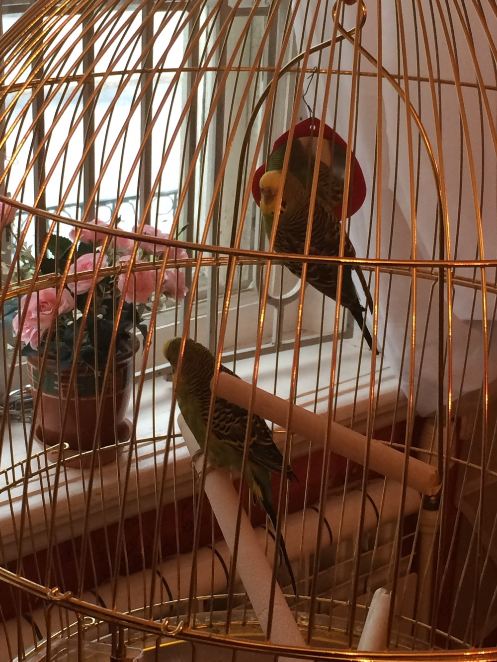 They had songbirds at the Rimsky-Korsakov museum. It seemed fitting.