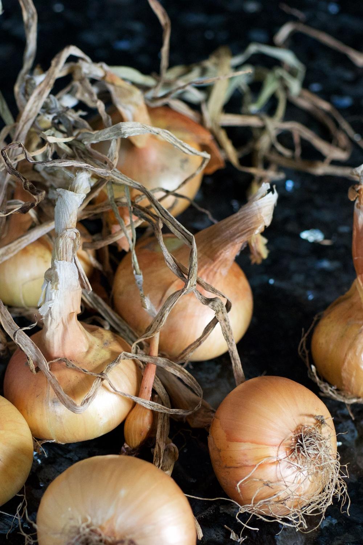 onionrechts