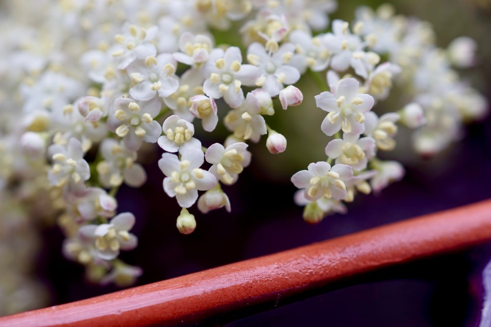 Another pretty mixer? - Elderflower syrup