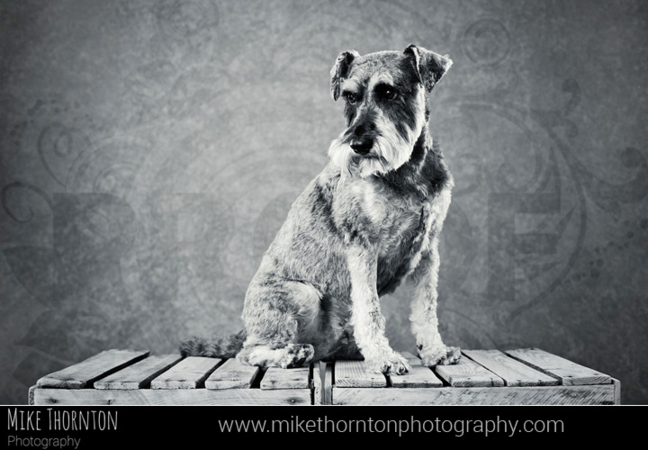 dog photographer Cambridge