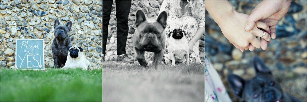 dog photography cambridge