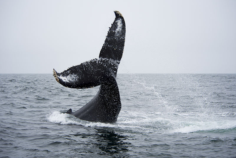 airstream rental san diego monterey whale.jpg
