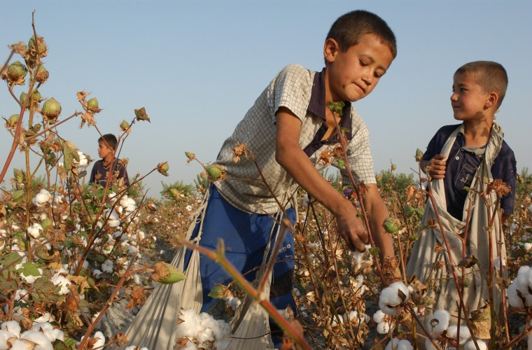 Child Cotton Farmers in Uzbekistan.jpg