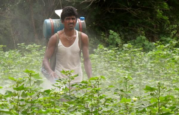 India Cotton Farmer (Andrew Flachs).jpg