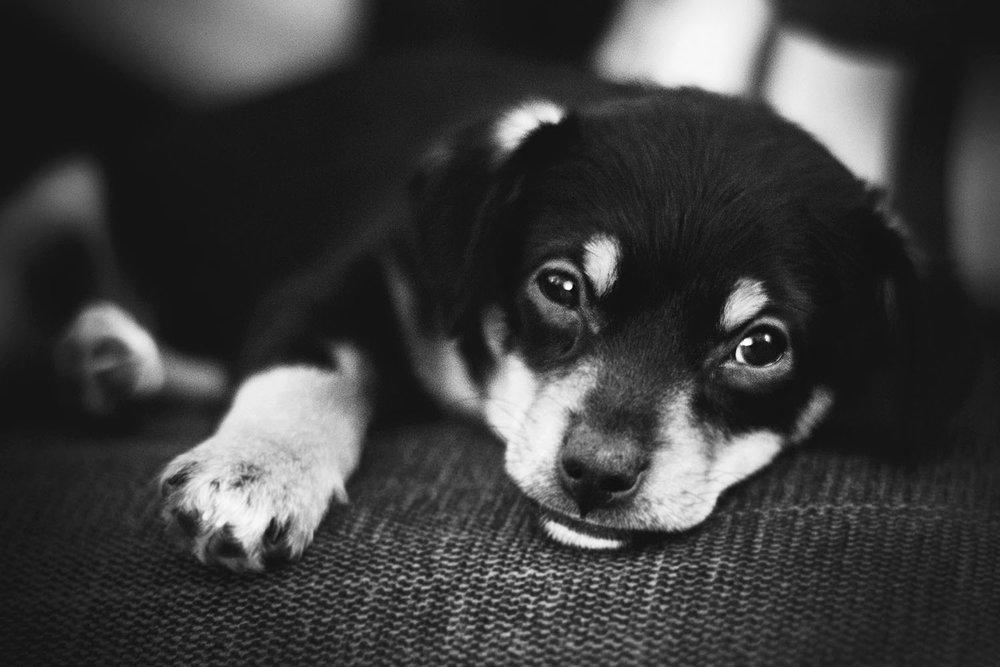 Balou_dog_HelenaLundquist.jpg