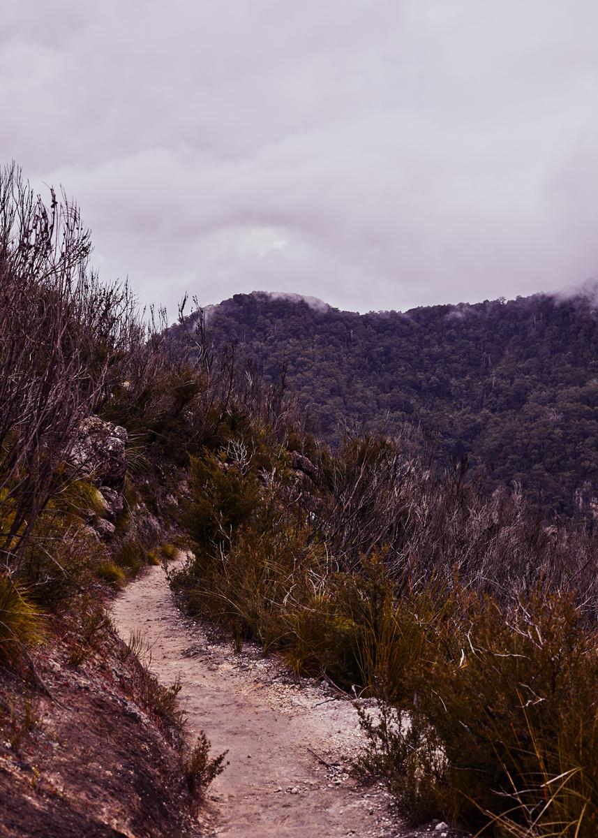 jefflevingston-outdoors-binnaburra.jpg