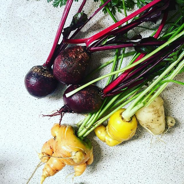 Home grown produce for the juicer @hakuna_foods . Epic beetroots. Carrot fail 😂 #chef #homegrown #homegrownveg #seasonal #vegetables #juicing #catering #hakunafoods #eattherainbow #healthy #eatclean #health #food #healthfood #vscocam #goodfood #thefeedfeed #feedfeed #f52 #food52