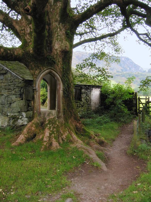 JohnBanks-Doorway-Tree.jpg