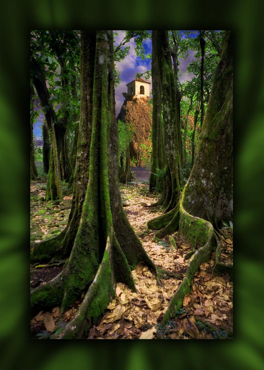 069 Moorea tree Final w back.jpg