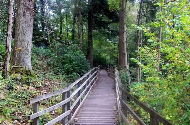 woodland_trail.jpg.662x0_q70_crop-scale.jpg