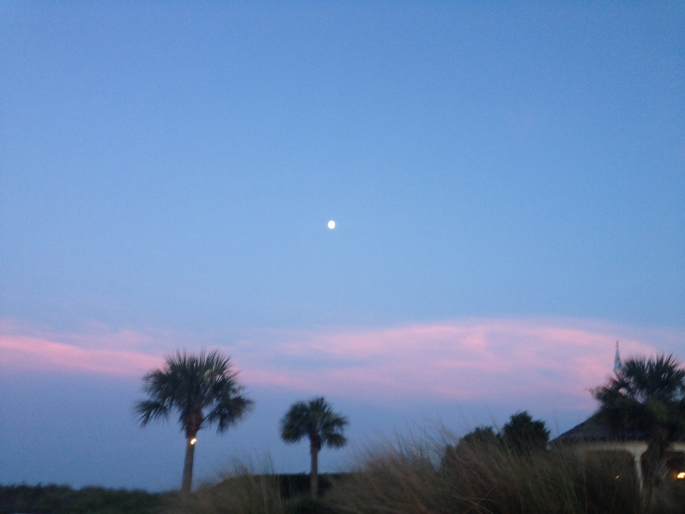 Moon and Palmetto Trees