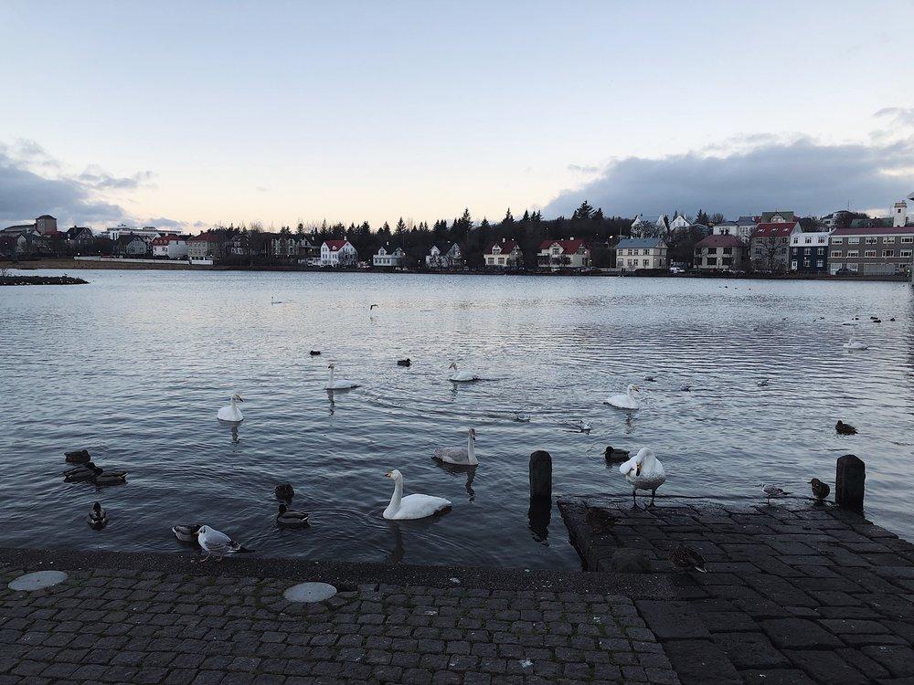 Reykjavik pond.JPG